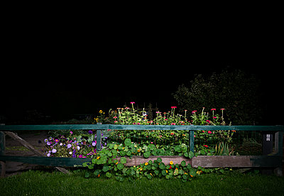 Flowerbed - p1132m2027948 by Mischa Keijser