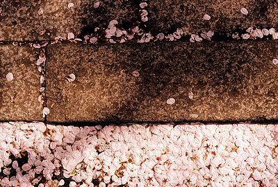 Stone floor - p1205m1021016 by Philip Gostelow