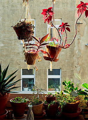 Grüne Fensterbank - p989m2159091 von Gine Seitz
