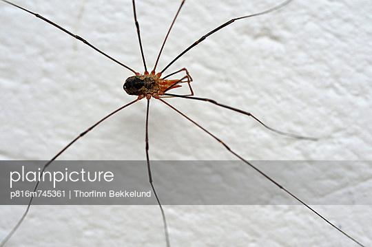 p816m745361 von Thorfinn Bekkelund