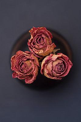 Drei getrocknete Rosen - p971m944569 von Reilika Landen
