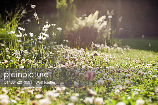 Summer meadow in the evening sun. - p1433m2013591 by Wolf Kettler
