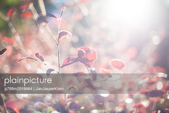 Blätter im Gegenlicht - p795m2019964 von Janklein