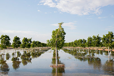 Überschwemmung - p919m1116444 von Beowulf Sheehan