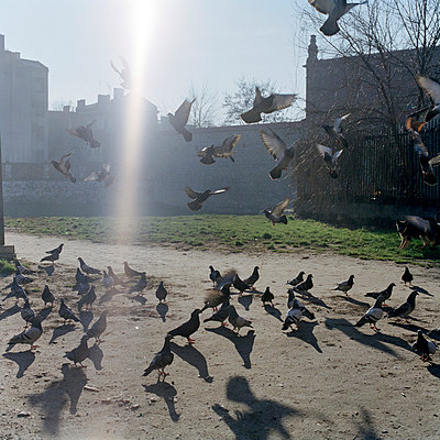 Pidgins in Krakow - p949m658303 by Frauke Schumann