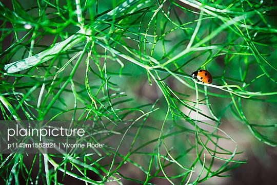 Marienkäfer im Garten - p1149m1582821 von Yvonne Röder