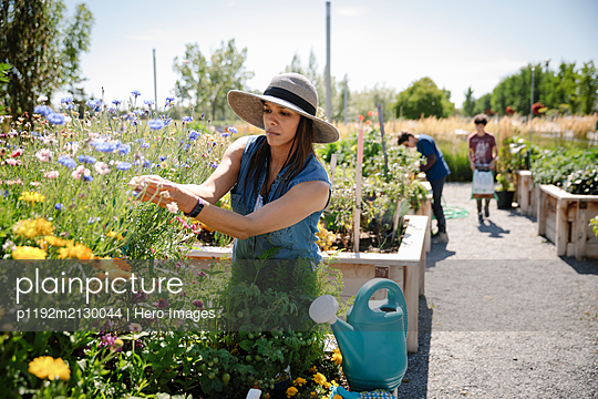 Woman tending to flowers in sunny community garden - p1192m2130044 by Hero Images