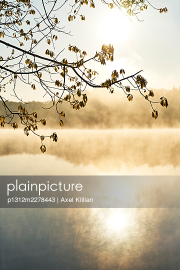 Germany, Tree Branch with Leaves In the Backlight - p1312m2278443 by Axel Killian