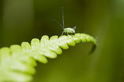 Bug on fern - p312m2078555 by Kentaroo Tryman