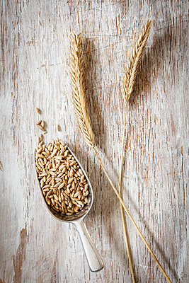 Two rye spikes and shovel of rye grains - p300m1567922 by Eva Gruendemann