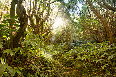 Portugal, Azores, Sao Miguel, Forest trail to Lago Azul - p300m930074f by noonland