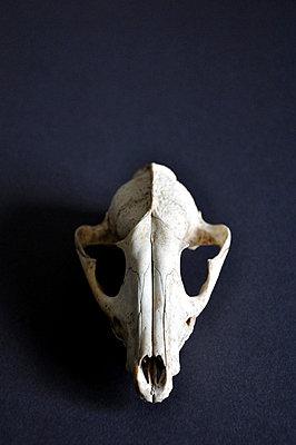 Fuchskopf - p8760012 von ganguin