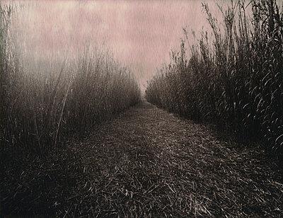 Strange path - p1148m938313 by Nicolas Poizot