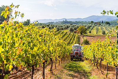 Tractor parked in a vineyard - p300m2140955 by Giorgio Magini