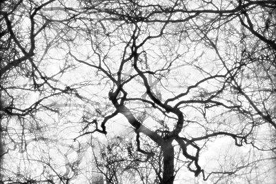 Kahle Bäume    - p450m1109566 von Hanka Steidle