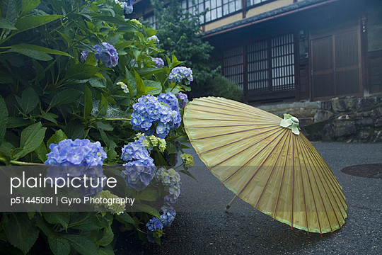 Parasol next to hydrangeas, Sakamoto, Otsu, Shiga Prefecture, Japan