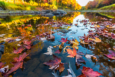 Fall colors reflect in a river in Maine - p1166m2094322 by Cavan Images
