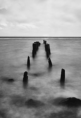 Wooden posts as breakwater at the seaside - p1561m2150182 by Andrey Cherlat