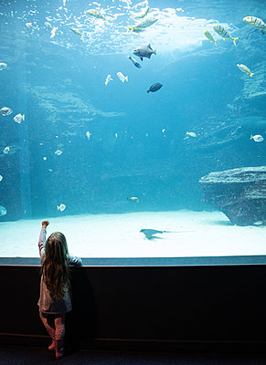 Two Oceans Aquarium, girl marvels at sea animals - p1640m2246229 by Holly & John