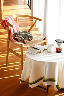 Cat Relaxing On Chair, Round Table Covered By Tablecloth - p307m700483f by Imaggio