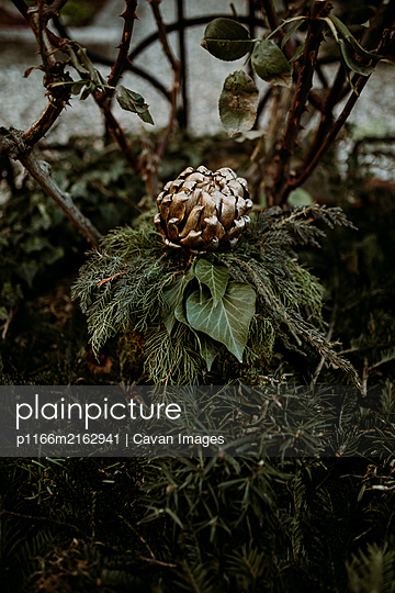 Garden decoration with golden artichoke laying on top of green leaves - p1166m2162941 by Cavan Images