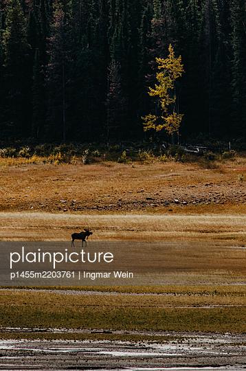 p1455m2203761 by Ingmar Wein