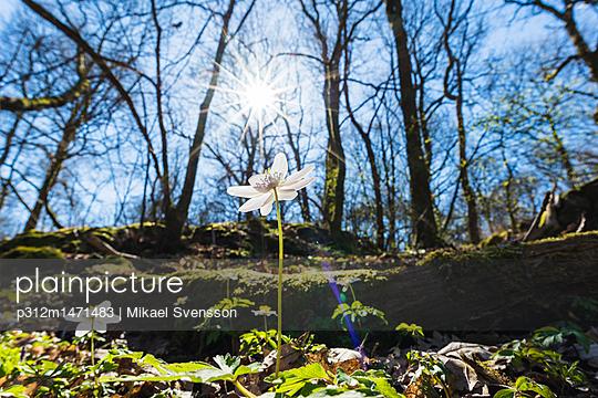 p312m1471483 von Mikael Svensson