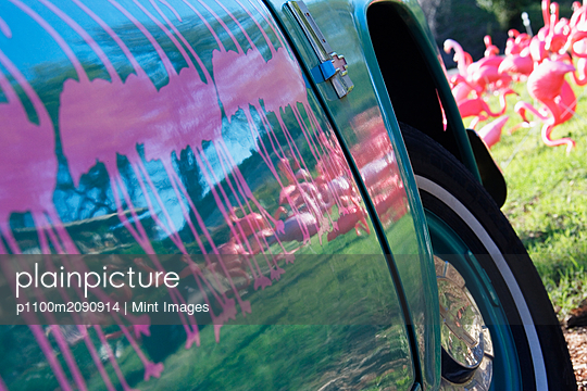 Pink Flamingos Reflected on Car Door - p1100m2090914 by Mint Images