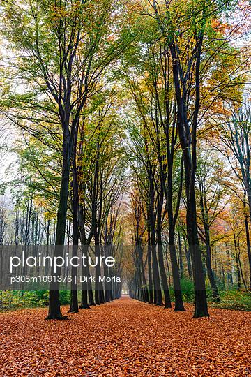 Herbstwald - p305m1091376 von Dirk Morla