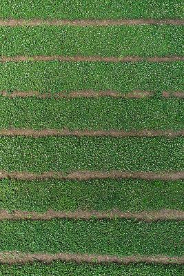 Full frame aerial view of crops growing in field - p301m1406291 by Stephan Zirwes