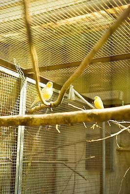 Vogelkäfig - p1075m1515650 von jocl