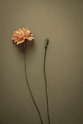 Garden weeds - p1228m1461186 by Benjamin Harte