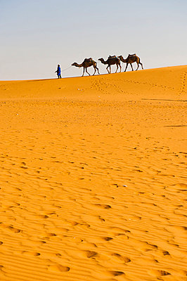 Camel caravan in Erg Chebbi Desert, Sahara Desert near Merzouga, Morocco, North Africa, Africa - p871m805626 by Matthew Williams-Ellis