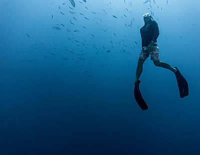 Free diver ascending to the surface at the great Barrier Reef - p1166m2202120 by Cavan Images