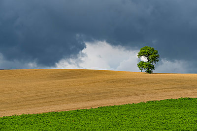 Italy, Tuscany, Val d'Orcia, single oak tree on a hill - p300m1191431 by Lorenzo Mattei