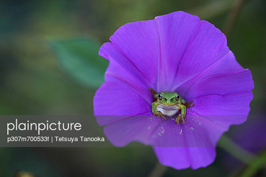 p307m700533f von Tetsuya Tanooka
