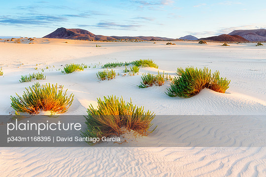 Sand dunes, near Corralejo, Fuerteventura, Canary Islands, Spain, Atlantic, Europe - p343m1168395 by David Santiago Garcia