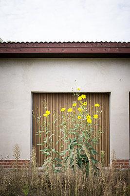 Blumentor - p403m2053844 von Helge Sauber