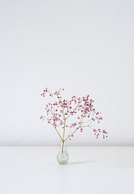 Blume in Vase - p1190m1120387 von Sarah Eick