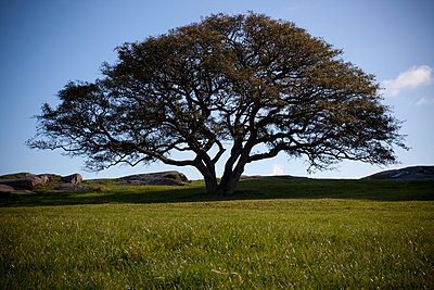 Tree in Denmark - p8240083 by jochen leisinger