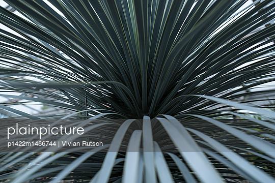 Blätterwerk einer Palme - p1422m1486744 von Vivian Rutsch