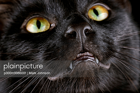 Face of black cat - p300m998600f by Mark Johnson