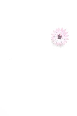 Single flower - p179m2231790 by Roland Schneider