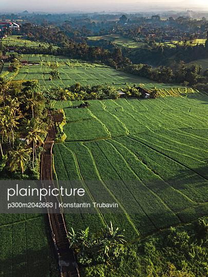 Indonesia, Bali, Ubud, Aerial view of rice fields - p300m2042663 von Konstantin Trubavin