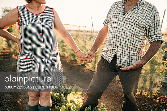 Senior couple holding hands while standing at vegetable garden - p300m2293515 by LUPE RODRIGUEZ