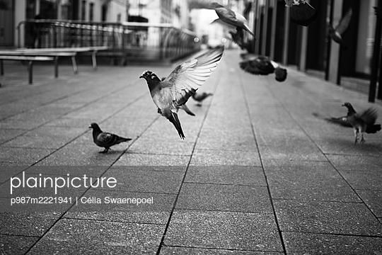 Envol de pigeons 02 - p987m2221941 by Célia Swaenepoel