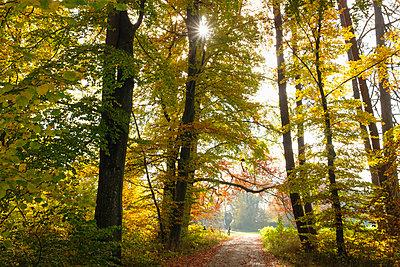 Germany, Bavaria, Bernried, forest path in autumn - p300m1356234 by Martin Siepmann