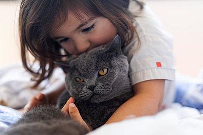 Little girl cuddling grey cat on bed - p300m2199584 by Valentina Barreto