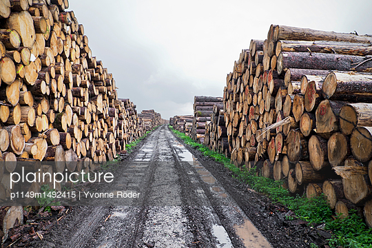 Timber industry - p1149m1492415 by Yvonne Röder