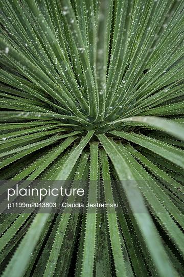 Pflanze - p1199m2043803 von Claudia Jestremski